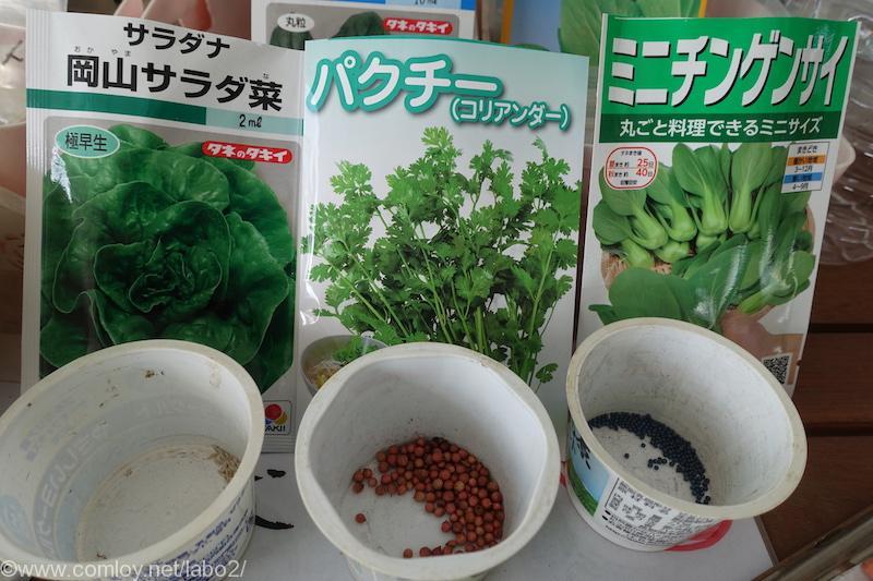 今日の畑/ 2月下旬からの畑のお手入れ講習会と1畝にサラダ菜、ミニ青梗菜、パクチーのタネを蒔く
