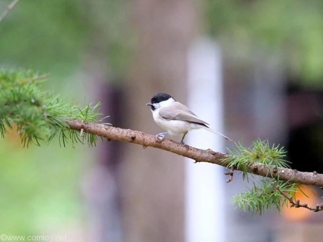 中札内農村休暇村フェーリエンドルフ 小鳥さんも間近でみられます。