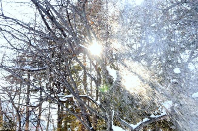 油断すると積もった雪が降って来る