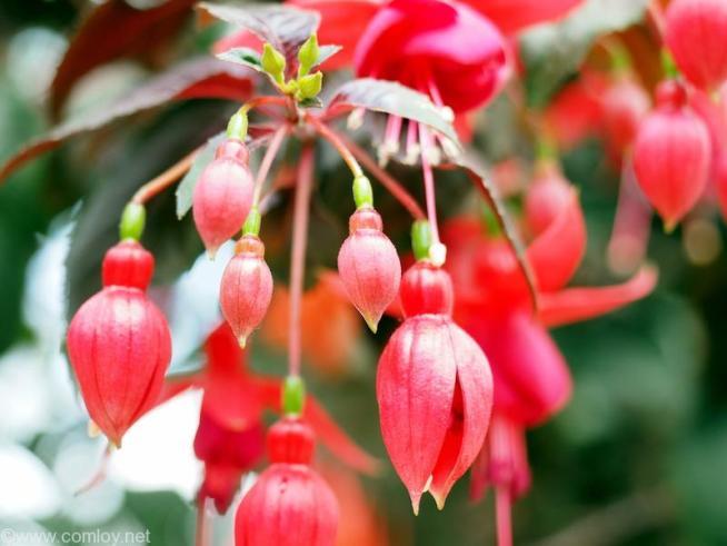 ガーデンズ・バイ・ザ・ベイ(GARDENS BY THE BAY) フラワードーム(Flower Dome)