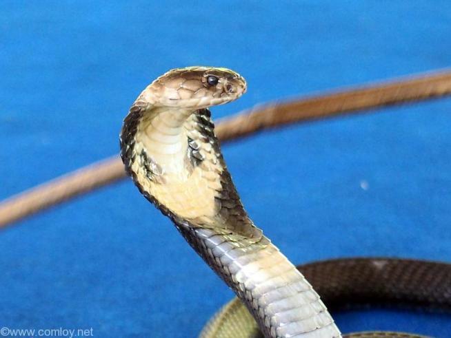 Mae SA Snakes Farm
