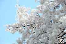 ホワイトツリー