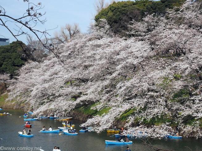 千鳥ヶ淵緑道の桜並木とボート 2018/3/26撮影