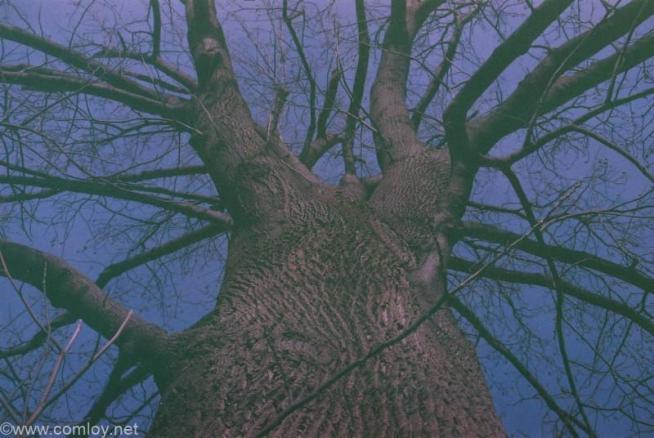 公園の樹木 ISO400フィルムを1段明るくISO200で撮影