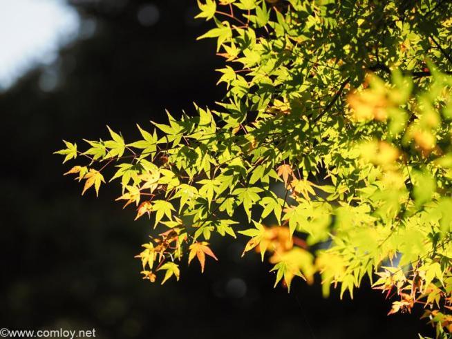 鞍馬山 由岐神社の紅葉