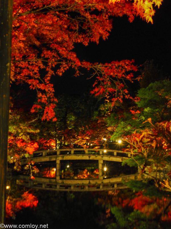 禅林寺 (永観堂)ライトアップ
