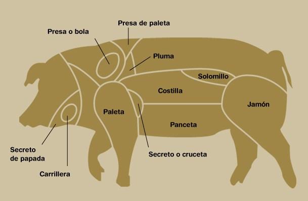 partes-y-carnes-del-cerdo