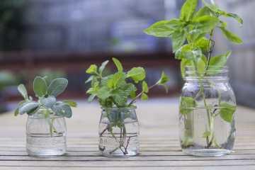 ¿No tenemos hierbas frescas? Pues secas 2