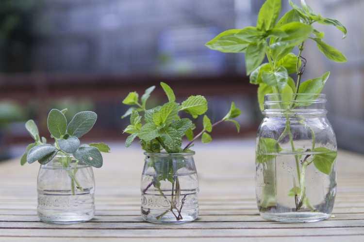 ¿No tenemos hierbas frescas? Pues secas 1