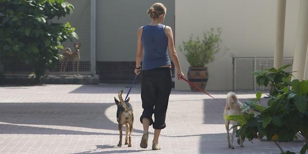 Promener son chien : les règles à observer