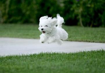Les principes de l'éducation canine positive et amicale