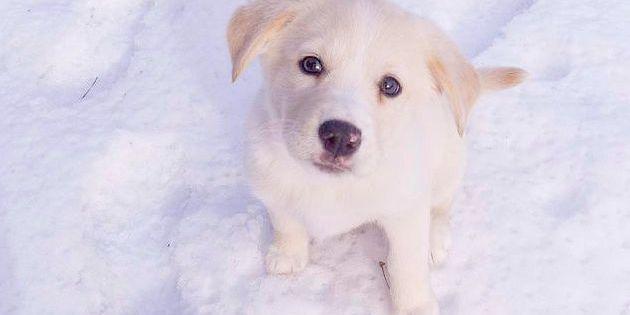 Voici 4 règles fondamentales pour bien dresser un chien