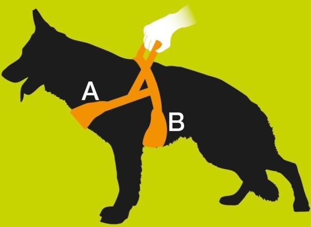 Un bon harnais pour chien est un des éléments indispensables