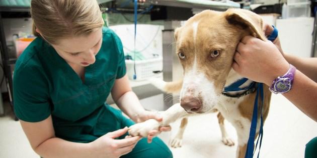 Chien lors d'une visite chez le vétérinaire