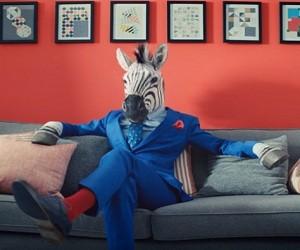 BampQ TV Advert 2016 Zebras