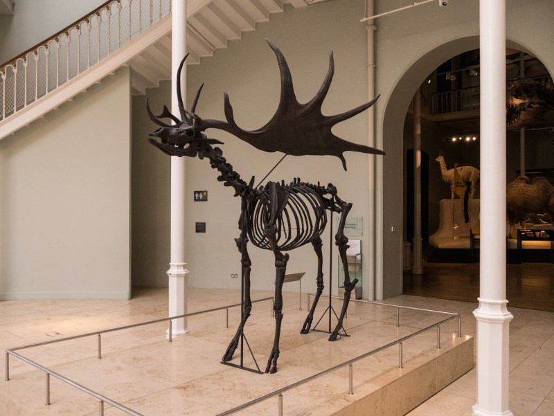 Musée national d'Ecosse