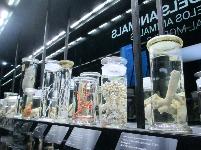 Coral specimens in cases on display in the exhibition space of the Museu de Ciències Naturals (Museu Blau)
