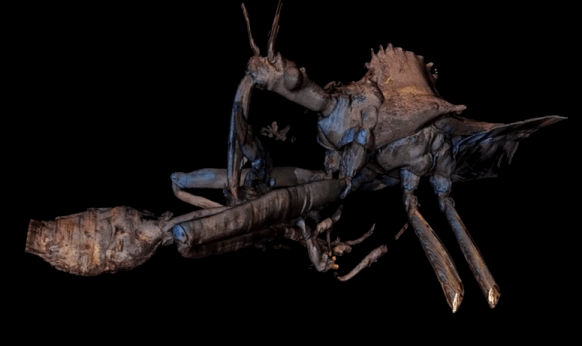 Wheel Bug attacking a Wasp (Laser Ablation Tomogram by L4IS)