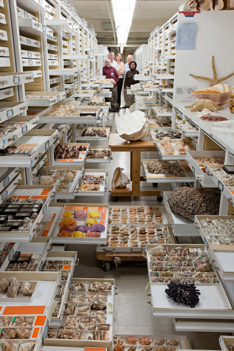 Invertebrate zoology specimens arranged in drawers at the Smithsonian Institution's National Museum of Natural History