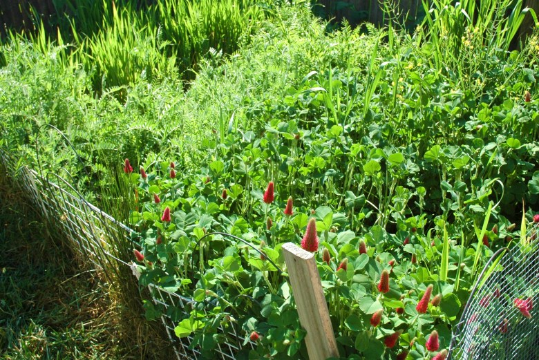 A cover crop in a garden in New York City
