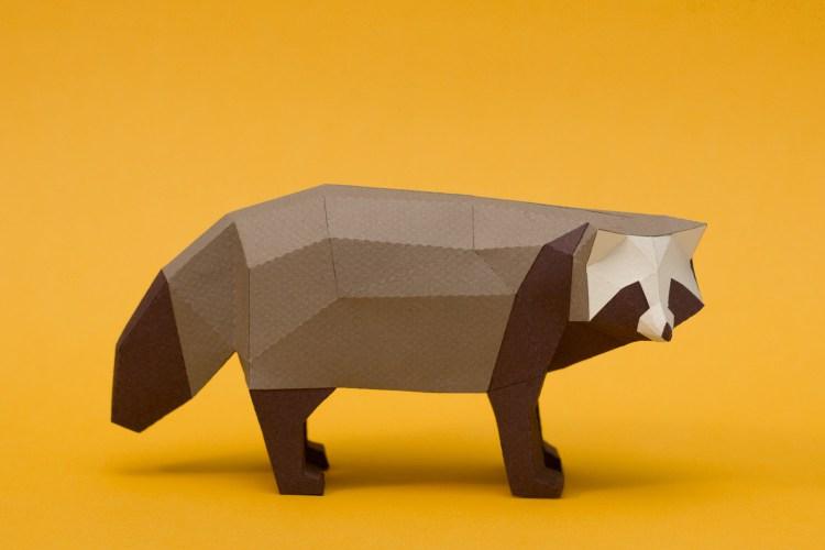 Perro Mapache / Raccoon dog (Nyctereutes procyonoides viverrinus) by Estudio Guardabosques