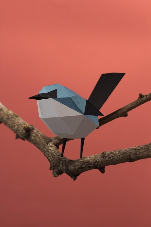 Tacuarita azul / Masked gnatcatcher (Polioptila dumicola) by Estudio Guardabosques