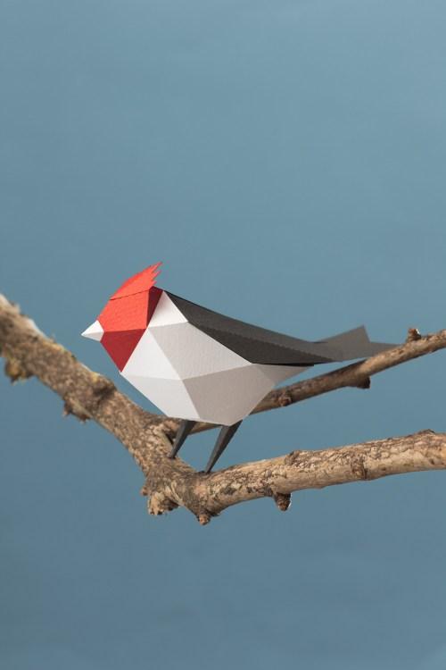 Cardenal común / Red-crested cardinal (Paroaria coronata) by Estudio Guardabosques