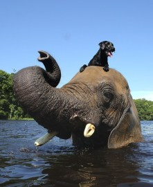 ElephantandDog