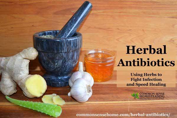 Herbal antibiotics may be an effective alternative for treating drug resistant bacteria. Herbs have been used ward off colds & flu, and speed wound healing.
