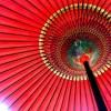 「花魁道中」を観に浅草一葉桜まつりへ出かけよう!カメラ&鑑賞攻略法