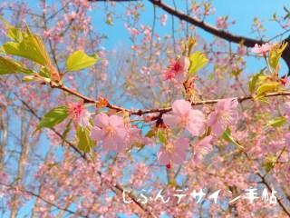 善福寺公園の桜の見ごろは?お花見の楽しみ方とボートの営業日をご紹介!