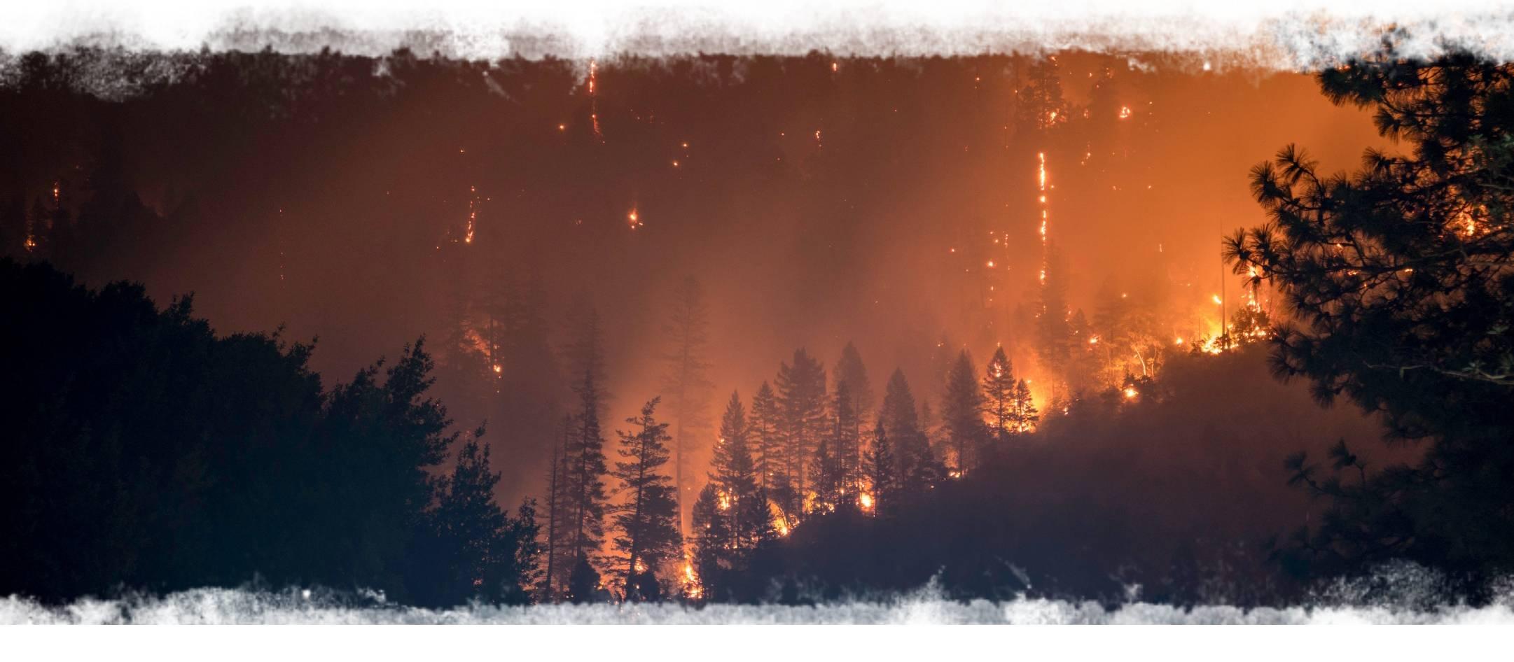 forest-fire (1).jpg