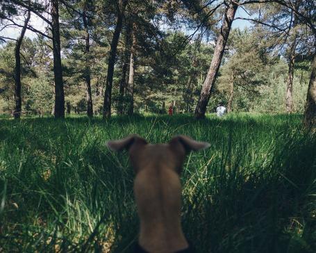 Shooting mit Hund Erfahrungen