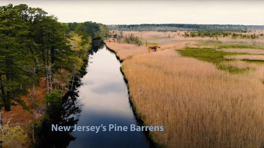 New Jersey's Pine Barrens.