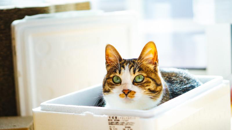 フリー素材提供サイト「ぱくたそ」でダウンロードした猫のフリー素材