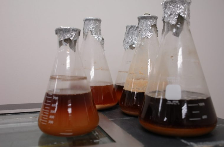 Local Liquid Yeast Ferments Far and Wide
