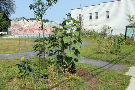 Freedom Square Food Forest maintained by the North Troy neighborhood and the Sanctuary for Independent Media.