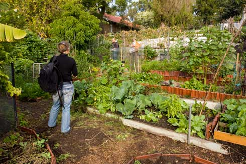 A visitor checks out the herbs and vegetables at Glovers Community Garden, Rozelle.