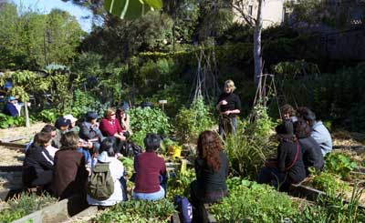 Local government oficers and others attending a workshop in an eastern Suburbs Sydney community garden.