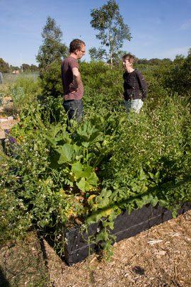 Victorian community garden network coordinaor, Ben Neil, talks with Fiona Campbell in the training garden.