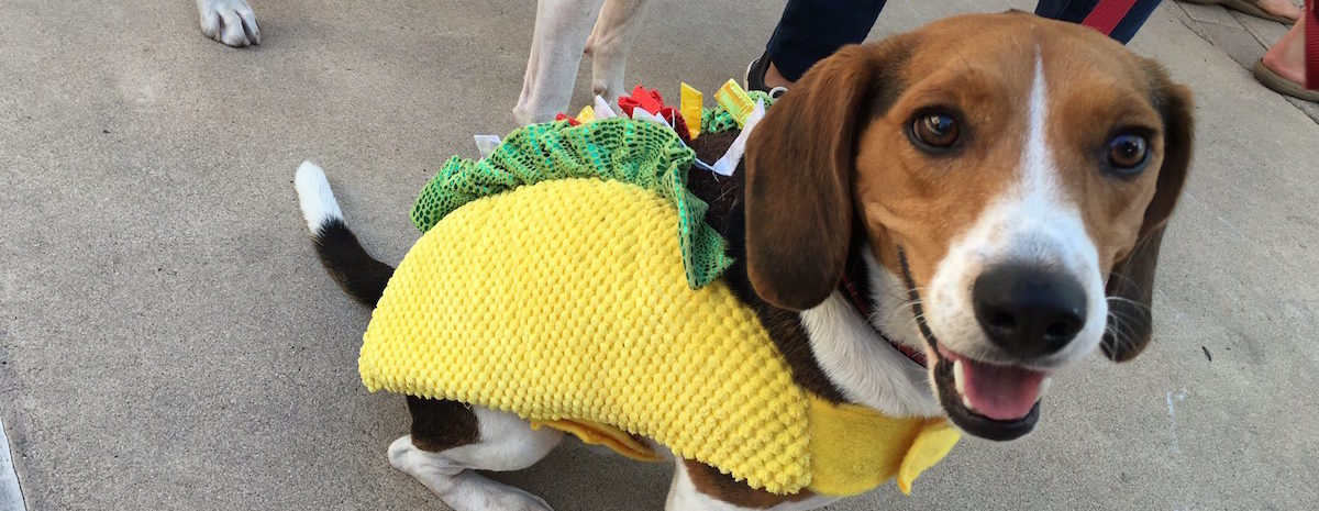 Barktoberfest is Oct. 22 at Old Settlers Park in Round Rock.