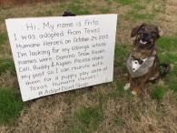 Adopted dog from Leander searches for siblings, invites them to playdate