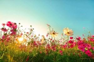 summer field e