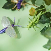Home Learning week 8 – Insects