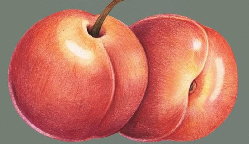 peaches e