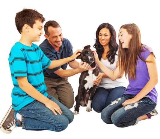 Adopt a pet and save a life