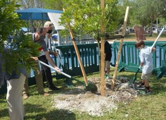Palmetto Bay marks National Arbor Day with tree plantings