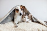 El perfil de la mascota asegurada en España: un perro de 4,5 años y de nombre Luna