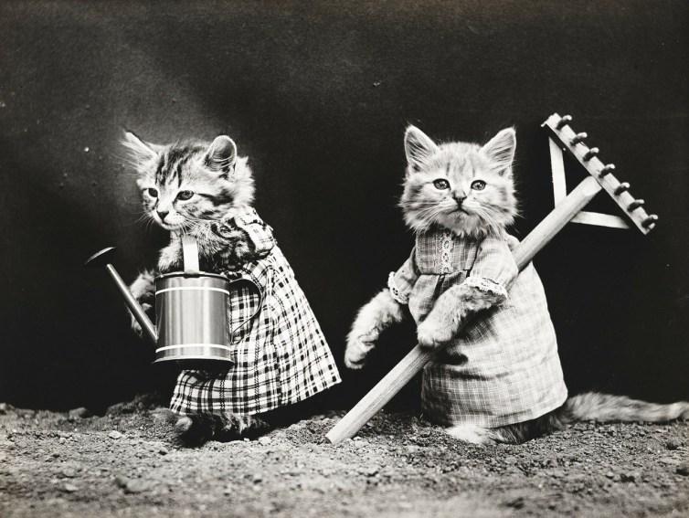 Kittens subcontract gardening tasks