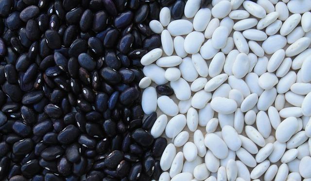 Como sembrar frijol y como hacer germinar su semilla for Sembrar maiz y frijol juntos